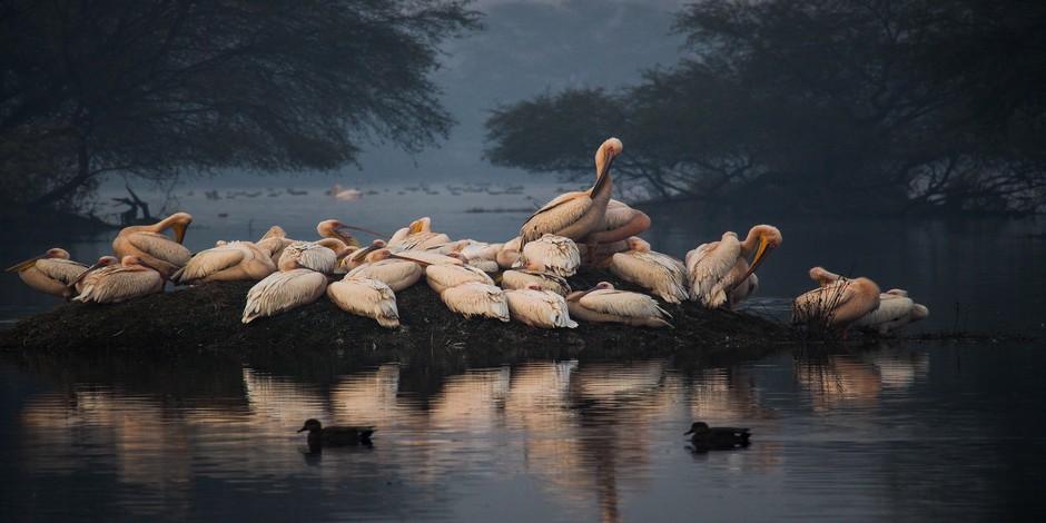 Sanctuaire des Oiseaux de Bharatpur