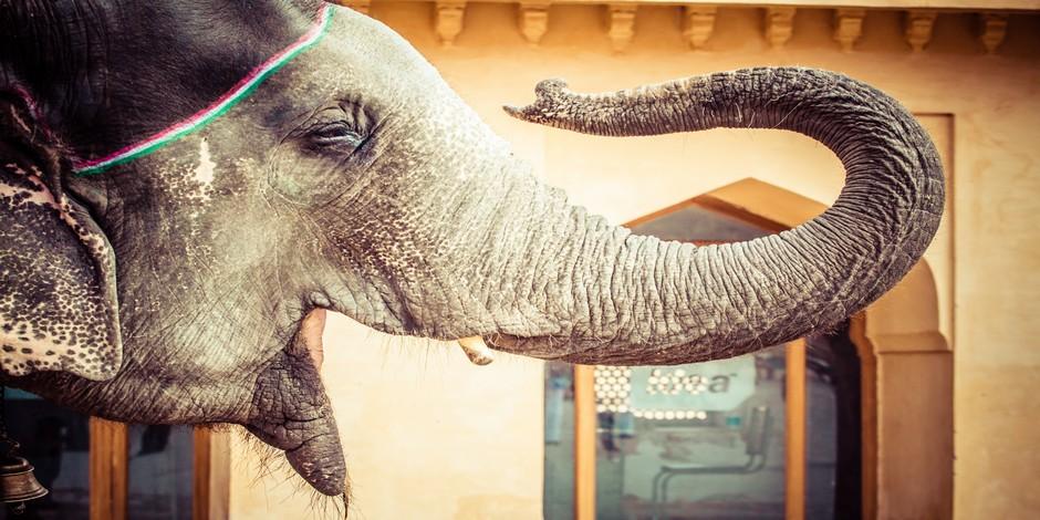 Les éléphants font partie des hôtes
